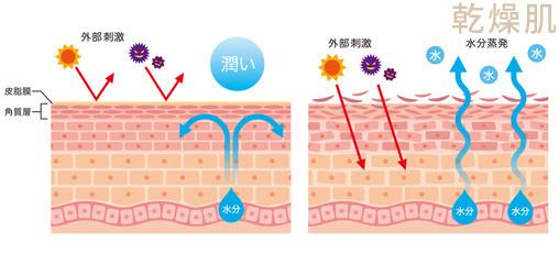 乾燥による肌のバリア機能の低下